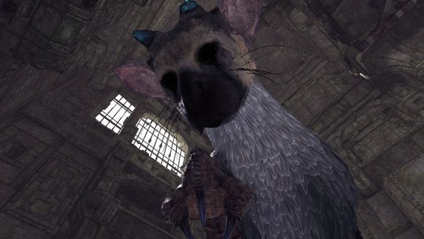 人喰いの大鷲トリコ VR