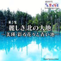 """""""日本驚嘆百景""""シリーズ第5弾『麗しき北の大地~美瑛・彩る花々と青い池~』"""